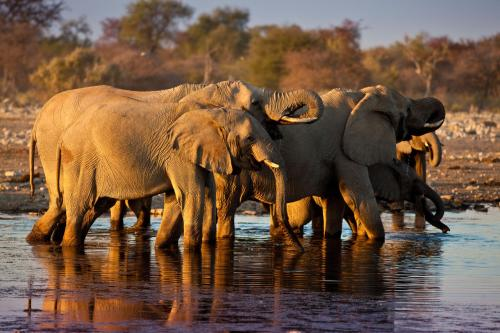 Mokuti Etosha Lodge - Elephants at Waterhole